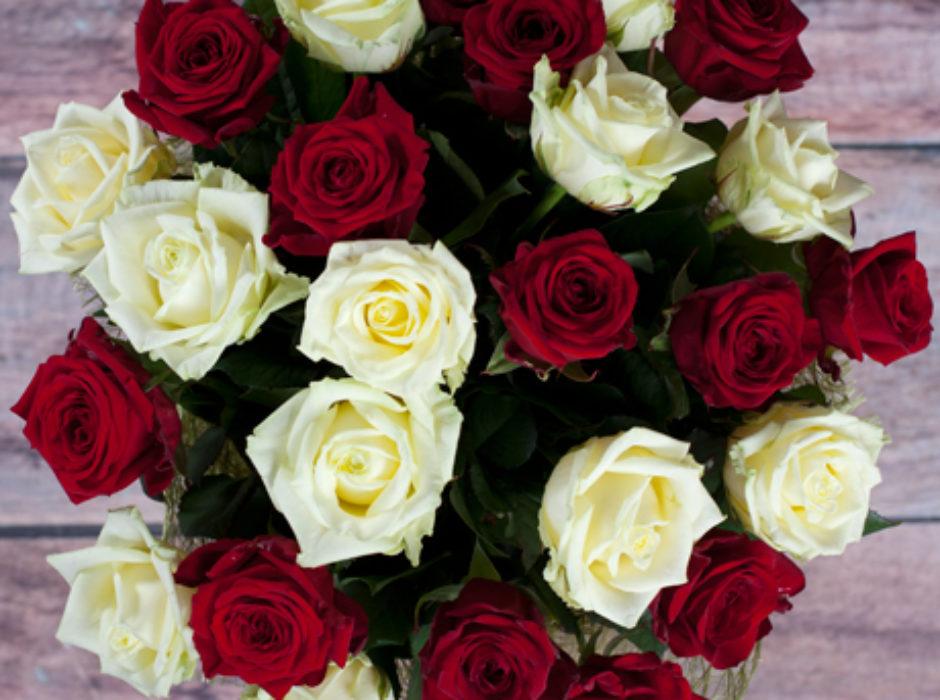 25 белая красная (3)
