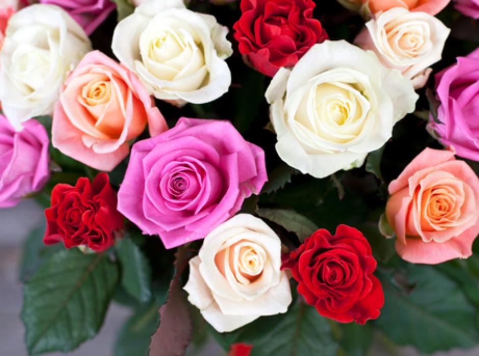 51 разноцветная роза (2)